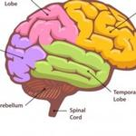 Types of Dementia: Frontotemporal Dementia